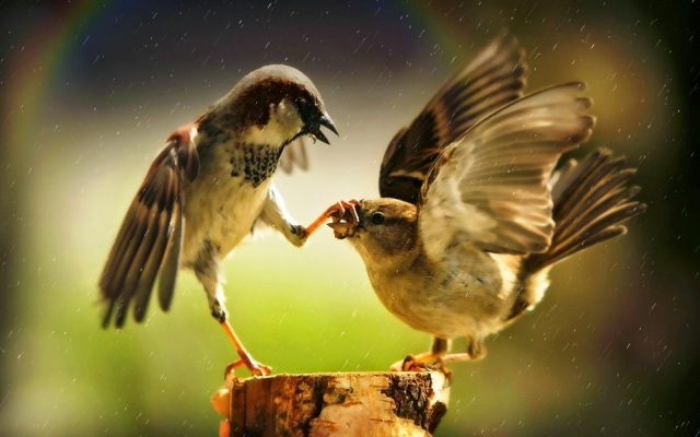 discussion_aggression_great_picture_birds.jpg